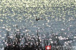 sergiocorbelli-verso-il-sole