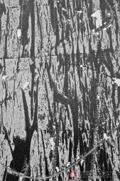 silviaalbrici-quelcheresta