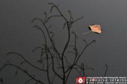 paolo-pederzani--autunno-2-jpg
