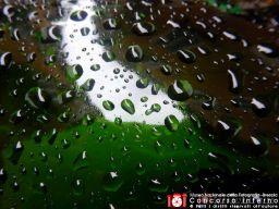 rosangelavitale-acqua-1