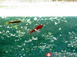 maurobaioni-pescimetafisici