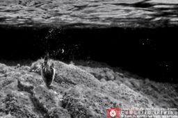 luigiangelococca-pescasubaquea
