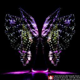 rossanapellegrino-farfalla