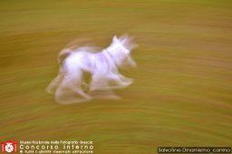 SalvoTine-Dinamismo_canino