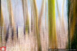 luigiangelo-cocca-colore-acceso