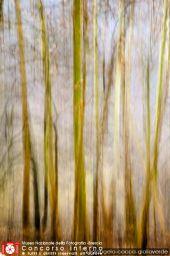 luigiangelo-cocca-gialloverde