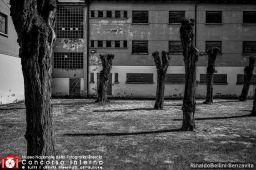 RinaldoBellini-Senzavita