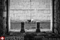massimo_alfano-street_dog