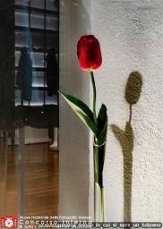 lorenamanenti-il_tempo_in_cui_si_apre_un_tulipano